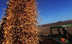 Preocupa baja disponibilidad en el tratamiento de semillas
